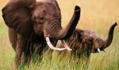 imagini elefanti 2
