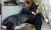 Întoarcerea la Canis Lupus! Lupul trăieşte acum în apartamentele oamenilor – Lupul Hibrid