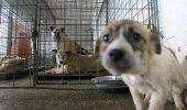 90% dintre câinii adoptați în străinătate sunt folosiți pentru ZOOFILIE, spune șeful ASPA