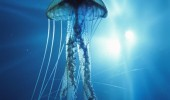 meduza-2
