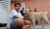E un ADEVĂRAT EROU! Un copil şi-a riscat viaţa pentru a salva un câine lovit de maşină