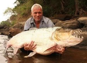 UITE cum arată unul dintre cei mai agresivi pești! Este atât de periculos, încât și crocodilii fug de el. VIDEO