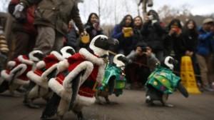 Și pinguinii au intrat în spiritul Crăciunului. UITE cum au fost costumate simpaticele animale. VIDEO