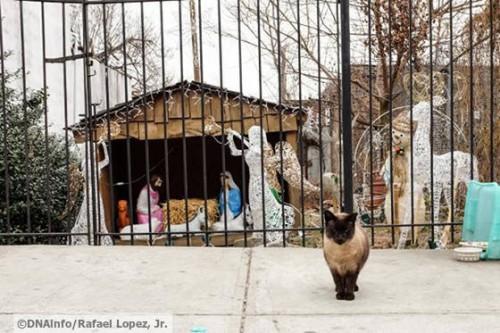 pisici isus2