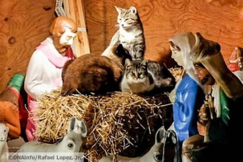 pisici isus3
