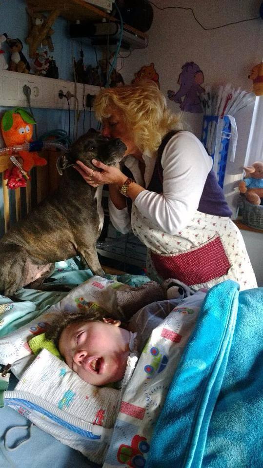 Tascha, Pitbullul care are grija de un copil aflat in coma.