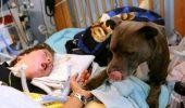 Pitbull -ul îi menţine tensiunea normală şi îl înveleşte, dar autorităţile vor să-i confişte câinele