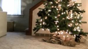 Ce face o pisică atunci când se plictisește? Distruge bradul de Crăciun. VIDEO