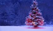 GENIAL! Afla cum au stopat TĂIERILE ILEGALE a pomilor de Crăciun…