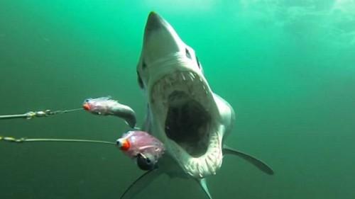 Mai multe plaje din Japonia, inchise din cauza rechinilor