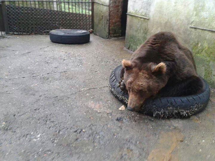 urs zoo resita