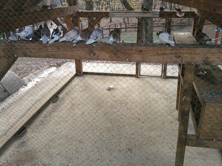 zoo resita porumbel mort