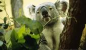 zoo-schoenbrunn-vienna-austria