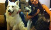 Madalin Ionescu si-a salvat cainii de la inghet