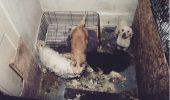 New York a declarat RĂZBOI traficanţilor de câini din PETSHOP -uri