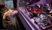 Wooow! S-a deschis un restaurant pentru câini şi pisici!