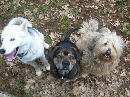 La Cluj, 3 câini îi vor ajuta pe studenți să scape de STRESUL din sesiune