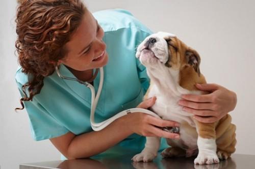 Am indoieli in privinta sterilizarii… Ce sa fac?