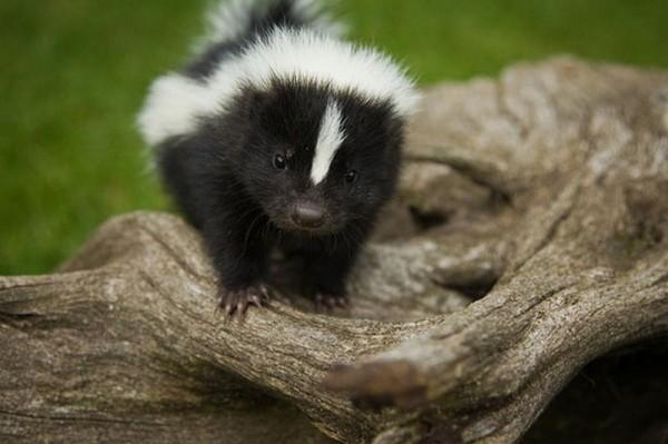 cute-little-animals-2-600x399