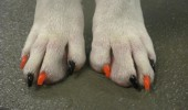 dog nails done, manicure caine, manichiura (3)