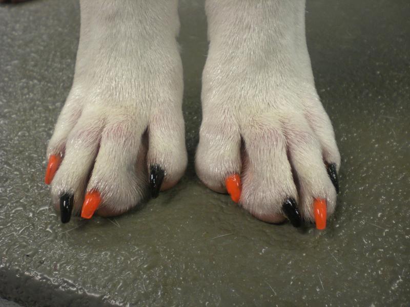dog nails done, manicure caine, manichiura (3)