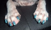 dog nails done, manicure caine, manichiura (4)