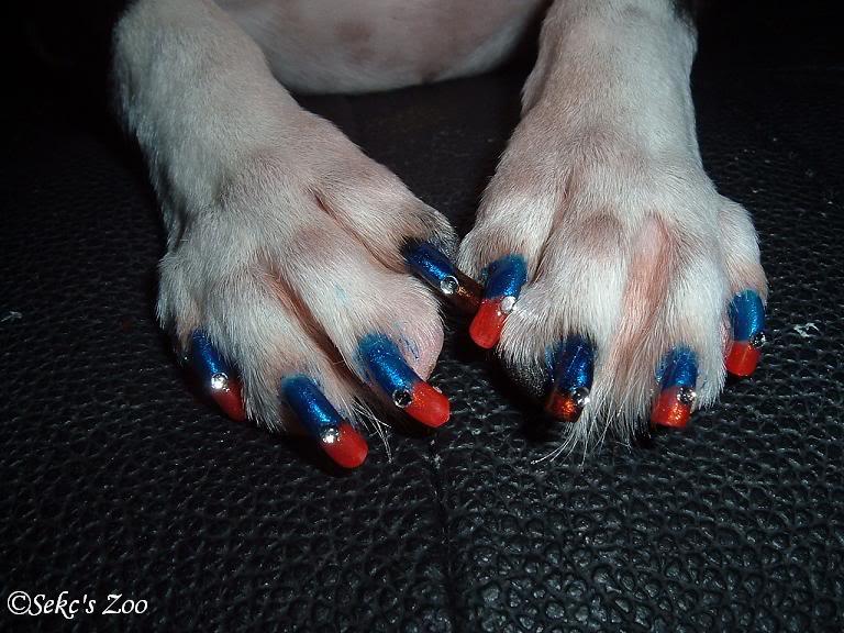 dog nails done, manicure caine, manichiura (5)