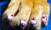 dog nails done, manicure caine, manichiura (6)