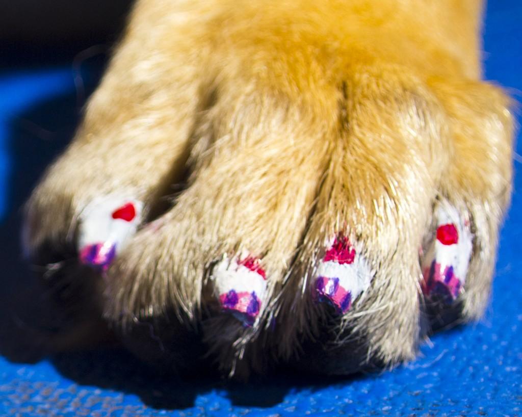 dog nails done, manicure caine, manichiura (6)