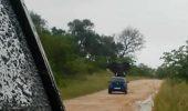 I-a pus cu roțile în sus! Un elefant A RĂSTURNAT o mașină care i-a invadat teritoriul. VIDEO