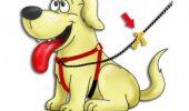 Ştii ce reprezintă fundiţa galbenă pusă la zgarda câinelui? Această informaţie îţi va fi de mare folos!