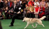 Seminar de DOG HANDLING la Buftea pe 8 şi pe 9 februarie!