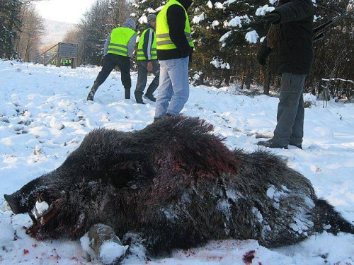 UITE cum s-a desfășurat vânătoarea de la Balc!
