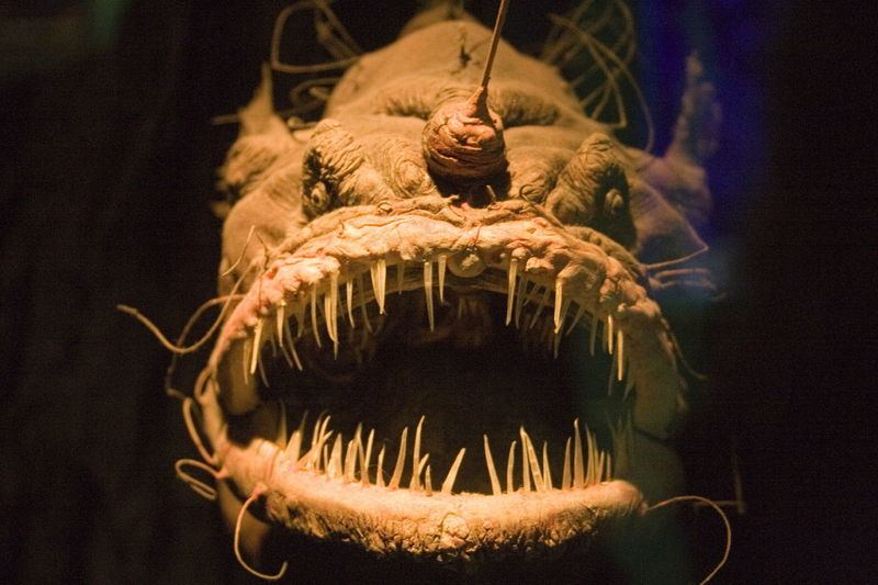 ocean-creatures-angler-fish-front