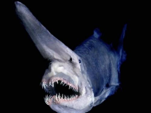 Monstrii exista cu adevărat! Aceste creaturi sunt 100% reale! (Atenţie! Imagini tulburătoare)
