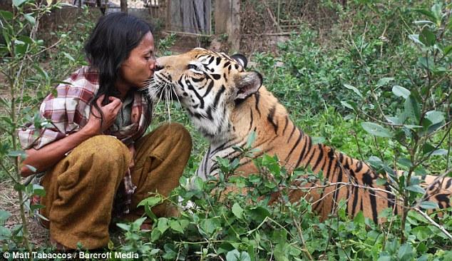 om tigru 1