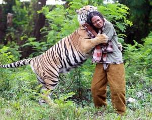 Om şi tigru: nu mai pot trăi unul fără celălalt!