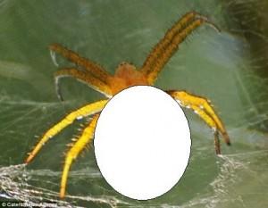 BIZAR. Chipul unei VEDETE, pe spatele unui păianjen