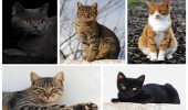 pisici2