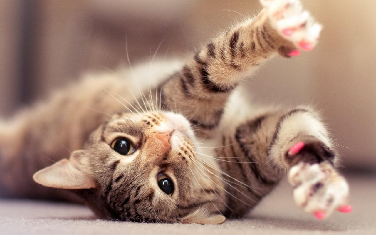 pisicile