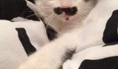 pisicuta cu mustati (1)