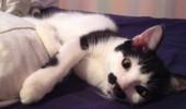 pisicuta cu mustati (11)