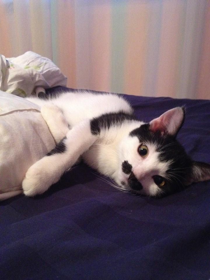 pisicuta cu mustati (12)