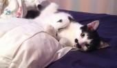 pisicuta cu mustati (13)