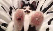 pisicuta cu mustati (15)