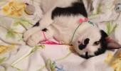pisicuta cu mustati (2)