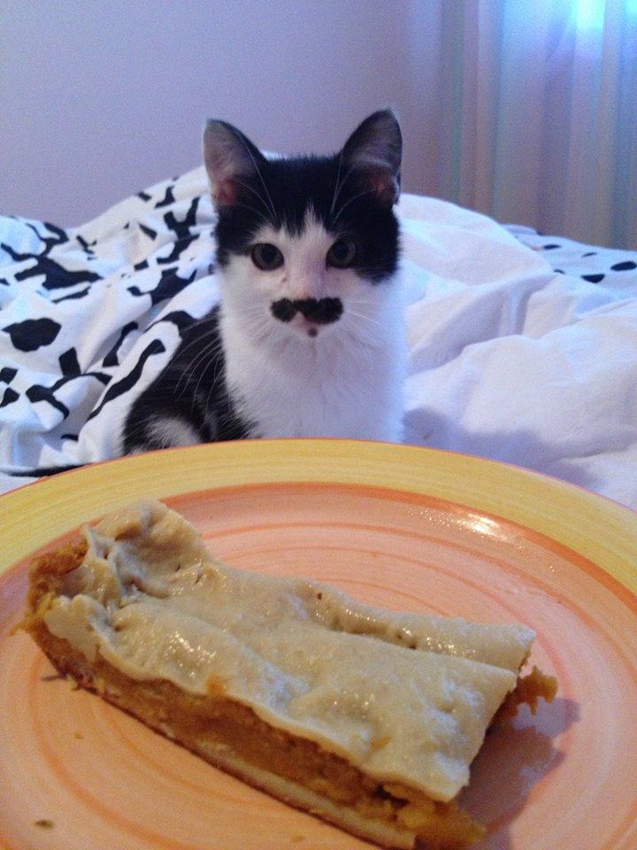 pisicuta cu mustati (4)