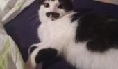 pisicuta cu mustati (8)
