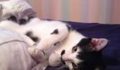 pisicuta cu mustati (9)