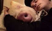 porc 3